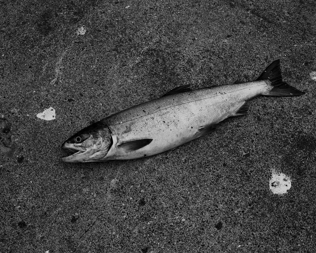 2017年9月 北海道網走市 自分で釣り上げた鮭