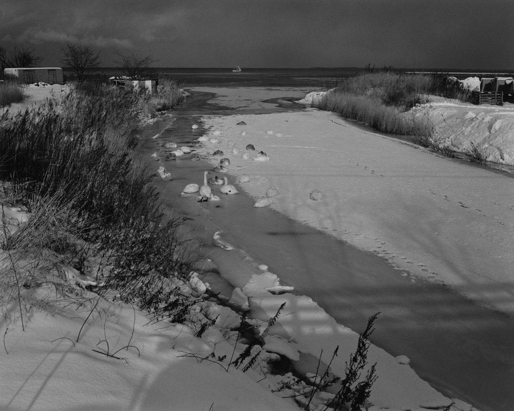 2017年12月 北海道常呂郡佐呂間町 凍った川の上に丸くなる白鳥